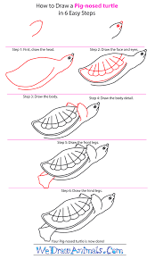 how to draw a pig nosed turtle