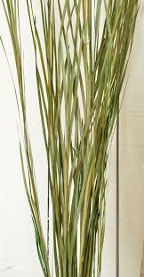 ornamental grass dried grass