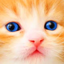 cat kitten kitty pet baby animal jigsaw puzzle games girls