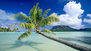 fond ecran bureau fond ecran bureau plage cocotier mer turquoise wallpaper desktop sea