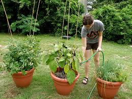 Can Cucumbers Grow Up A Trellis What Can I Grow In A Pot Bonnie Plants