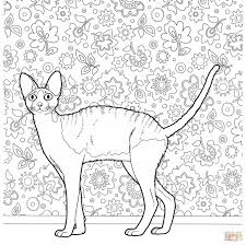 cat coloring pages for kids pages himalayan animal color cats himalayan cats coloring pages