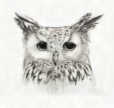 owl pencil drawing owl pencil sketch karanari on deviantart