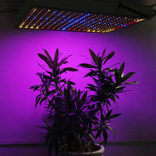 horticultural led grow lights horticultural led grow lights grow l in hydroponics l ideas