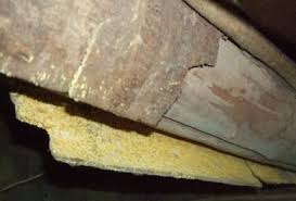 Mold In Bathtub Yellow Mold In The Home Health Risks Removal