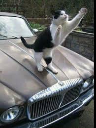 1959 jaguar mk ix leaper in car available for weddings