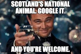 Funny Scottish Memes - scotland s national animal google it and you re welcome meme