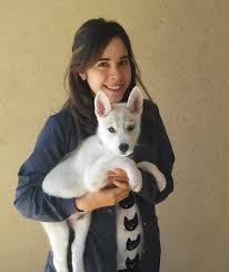 Veterinary Clinic Idaho Veterinary Internal Veterinarians East El Paso Animal Hospital El Paso Tx