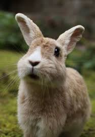 600 bunny rabbits 5 images animals funny