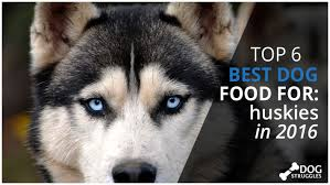 top 6 best dog foods for huskies in 2017 dogstruggles