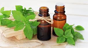 huile essentielle cuisine les vertus de l huile essentielle de basilic