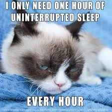 Grumpy Cat Sleep Meme - grumpycat on sleep i only need one hour of uninterrupted sleep