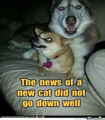 New Cat Meme - the news of a new cat did not go down well by brian poole 733