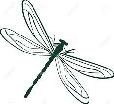 dragonfly wings images u0026 stock pictures royalty free dragonfly