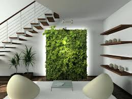 decor plants home home decor plants living room online indoor money plant residential