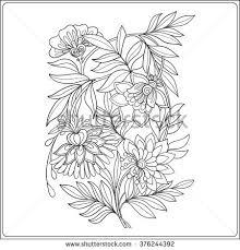 plumeria hand drawn vector illustration stock vector 592628765