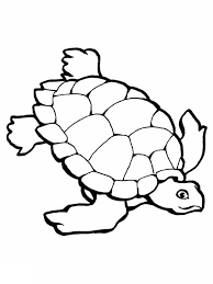 sea turtle coloring free download