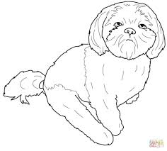 shih tzu coloring page free printable coloring pages