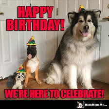 Birthday Dog Meme - birthday dogs are funny canine happy birthday humor dog b day
