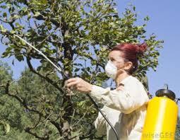 epa extends timeline for pesticide applicators rule fruit