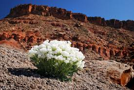 native utah plants programs fish and wildlife threatened and endangered state t u0026e