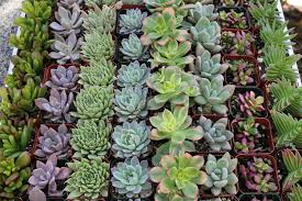 Flower Pot Sale Download Succulent Containers For Sale Solidaria Garden
