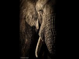 wildlife images David lloyd wildlife jpg