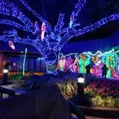 zoo lights houston 2017 dates zoo lights 199 photos 99 reviews festivals 6200 hermann park