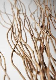 Curly Willow Branches The 25 Best Willow Branches Ideas On Pinterest Twig Template