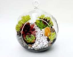hanging glass globe succulent terrarium with white rock path and