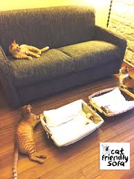 gatti divani cat friendly sofa part 5