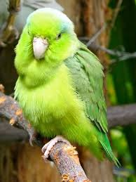 parrots in paradise kealakekua hawaii exotic bird 40 best best adult coloring books images on pinterest coloring
