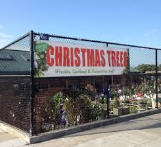 where to buy a x mas tree in san francisco and around lostinsf