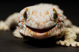 are lizards as silent as they seem