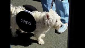 dog halloween costumes funny dog costumes youtube