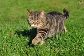 cat colour genetics pets4homes