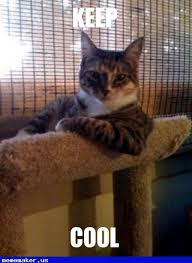 Make Your Own Cat Meme - 99 best the most interesting cat in the world meme creator images on