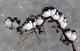 birds on a branch during a snowstorm photo one big photo