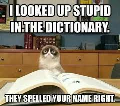 Grumpy Cat Meme Pictures - angry grumpy cat memes