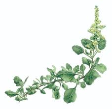 edible native australian plants australian flowers you can eat australian geographic