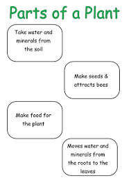 label the parts of a plant that you can eat by nabcab1 teaching