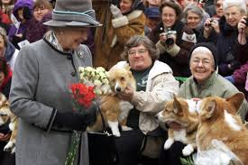 queen elizabeth dog 90 years of queen elizabeth looking lovingly at corgis racked