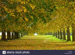 compressed perspective view of fallen leaves along an avenue of
