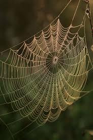 spider cobweb free image peakpx