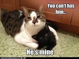 Mine Meme - go get your own kitten lolcats lol cat memes funny cats