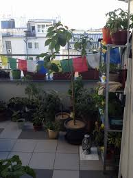 aliciouslife my balcony garden u2013 first steps aliciouslog