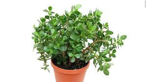 benefits of houseplants healthy houseplants that can purify indoor air