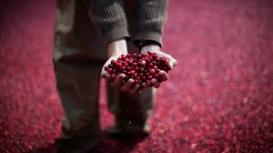 thanksgiving in different countries cranberry sauce on thanksgiving the dark history behind america u0027s