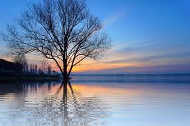 free photo tree lake mirroring isolated free image on
