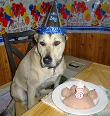15 dogs having the best birthday parties ever rover com